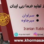 انواع خرما ربی ایران