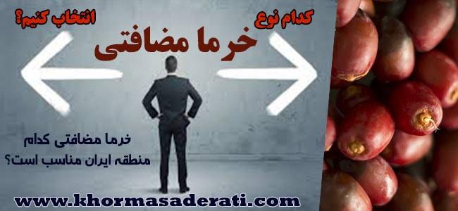 هترین خرمای مضافتی ایران