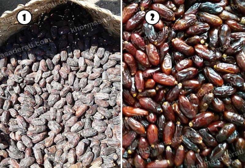 تولید خرمای ربی صادراتی