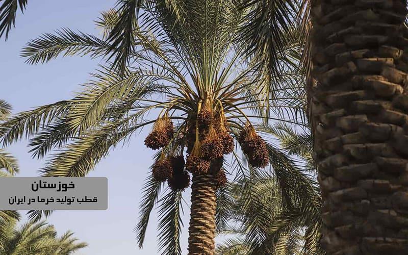 مرکز خرمای سایر خوزستان