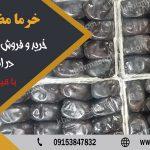 خرمای مضافتی بوشهر
